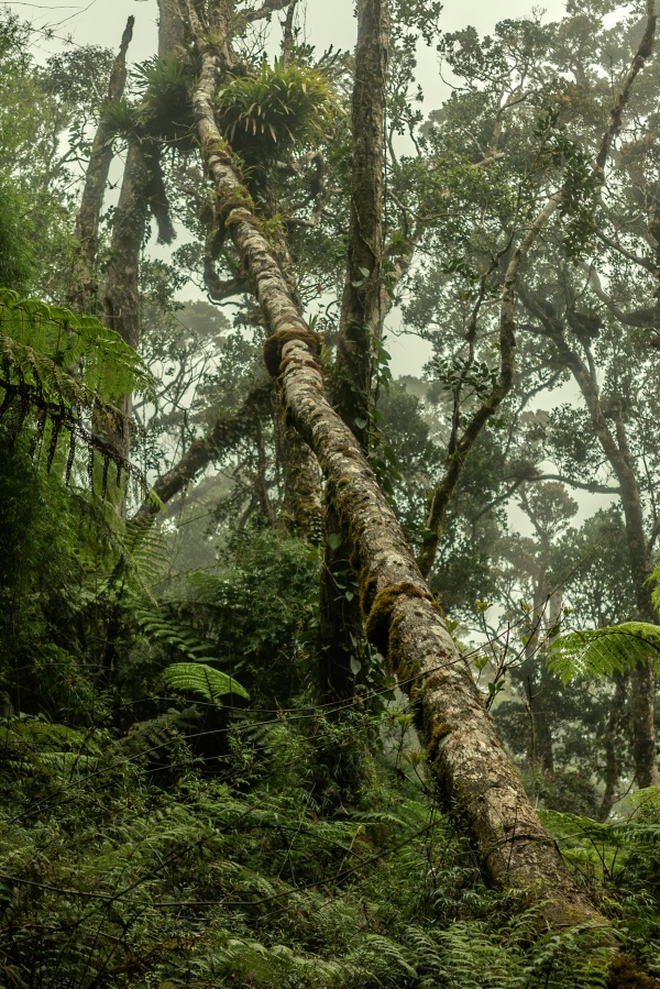 Rainforest of Mount Kinabalu in Borneo
