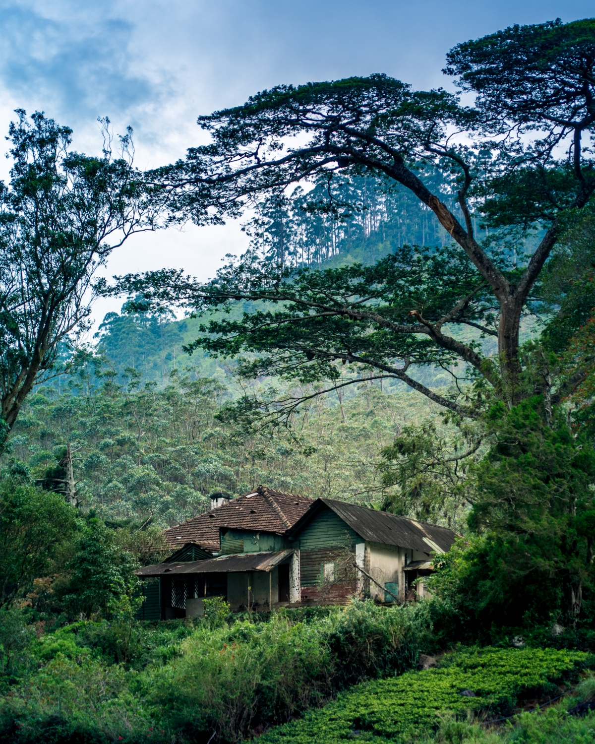 Photo of hillside house under a big tree. The photo has pretty mystical feeling into it.