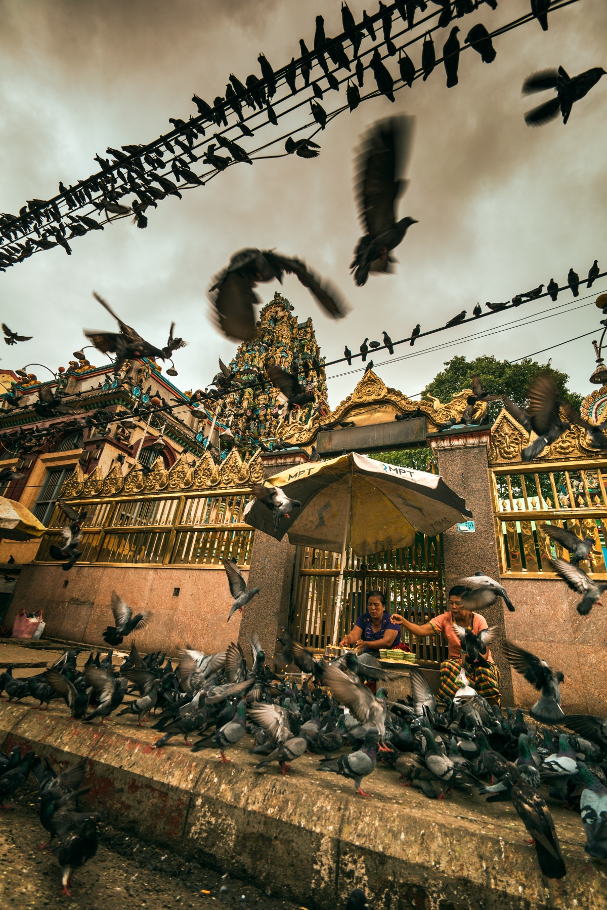 Photo of lots of pigeons and a hindu temple in background