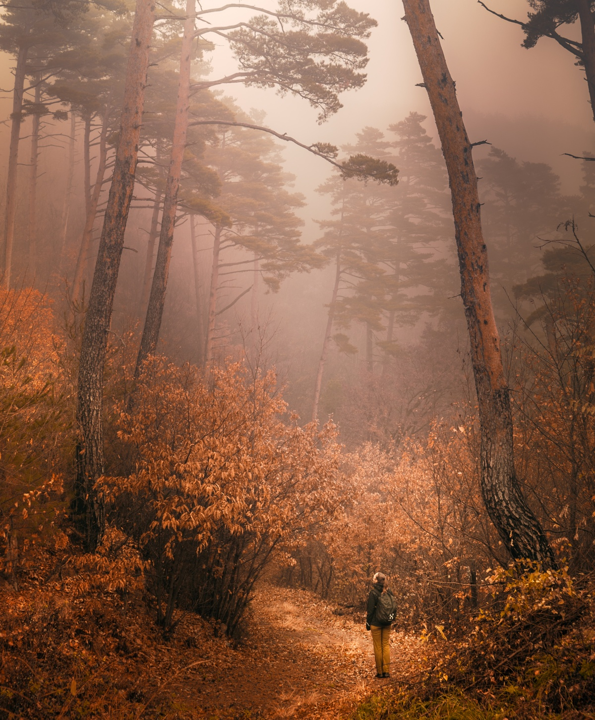 Photo of Misty autumn forest in Japanese alps near Matsumoto and Asama Onsen