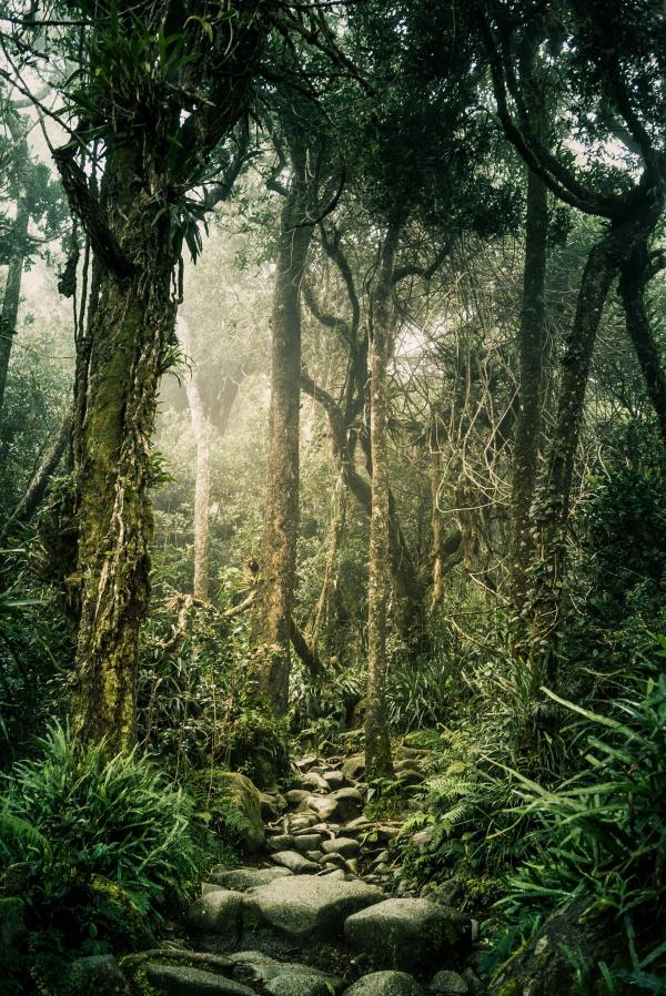 Pathway to Mount Kinabalu in Malaysian Borneo