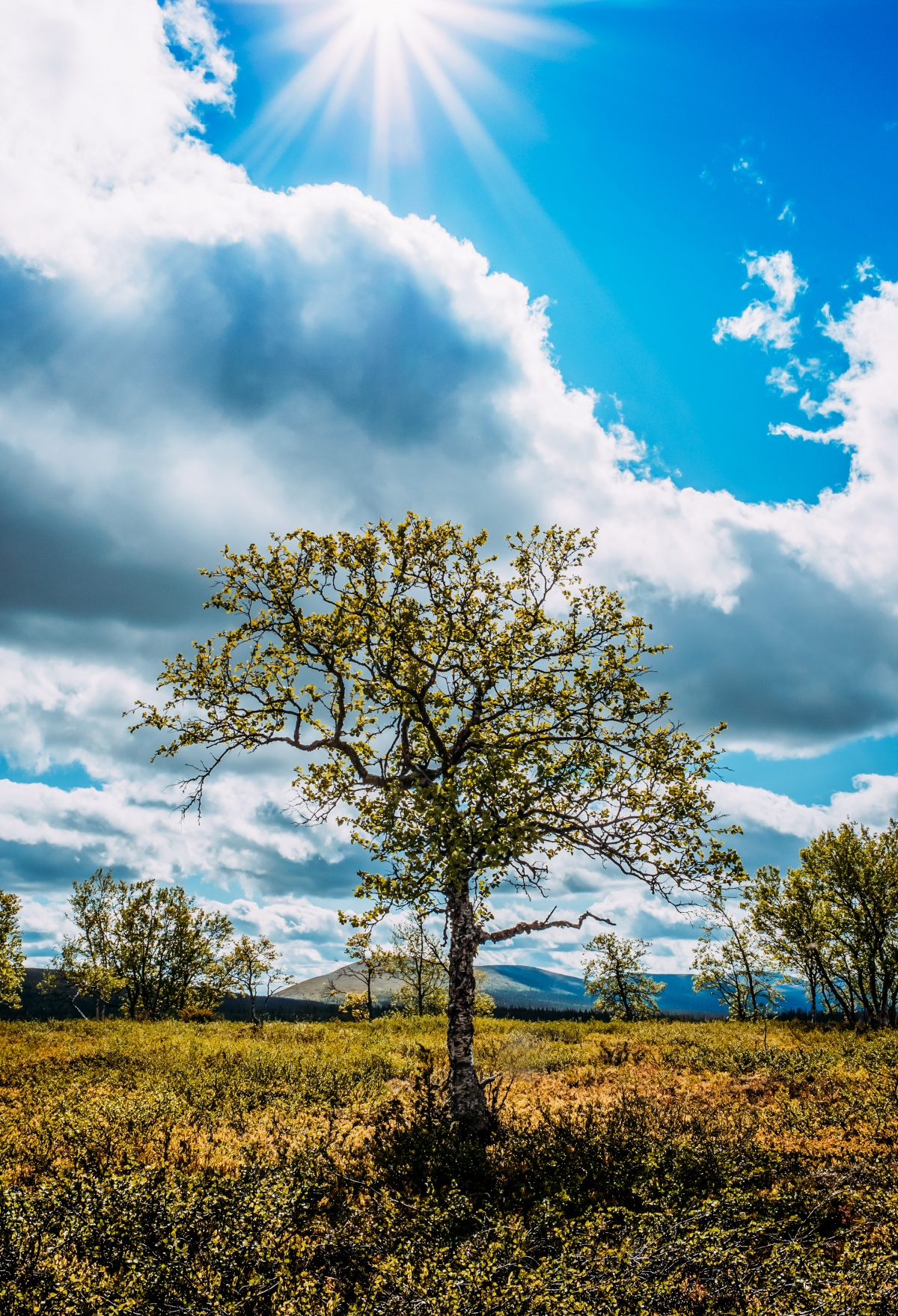 Photo of a beautiful tree in Lapland