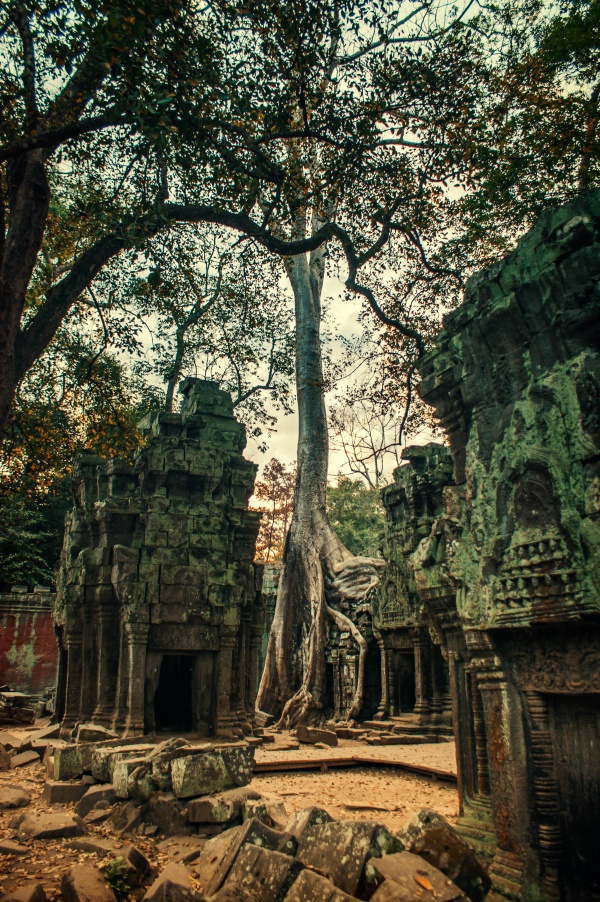 Ta Prohm temple in Angkor, Siam Reap, Cambodia