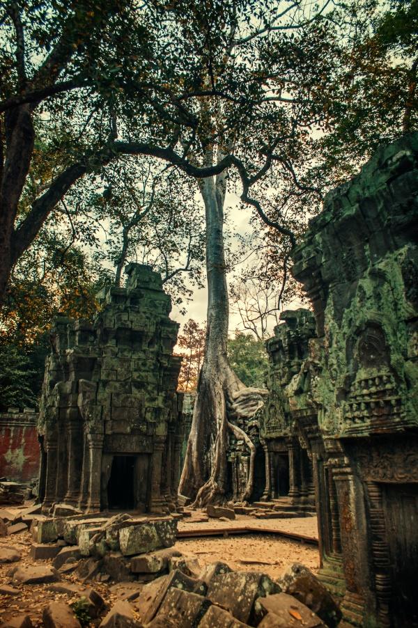 Ta Prohm temple in Angkor, Siam Reap, Cambodia